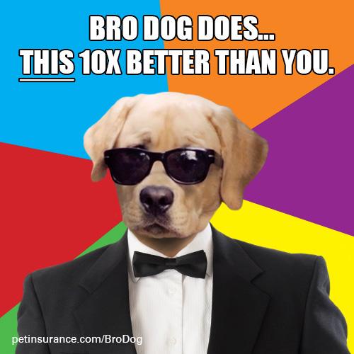 brodog