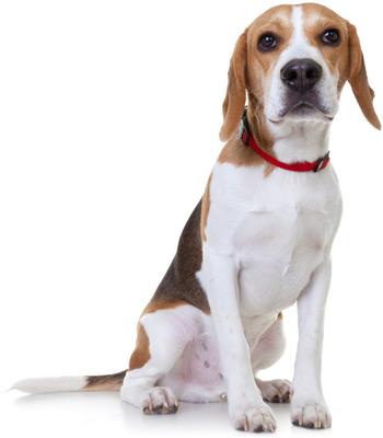 pet insurance nationwide pet health insurance plans amp reviews