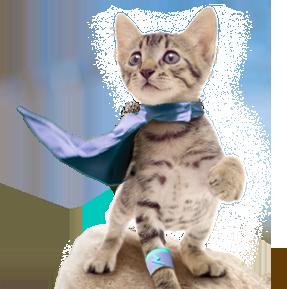 Property Cat Insurance