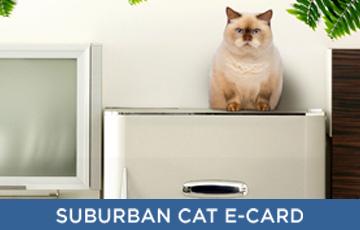 Suburban cat e-card