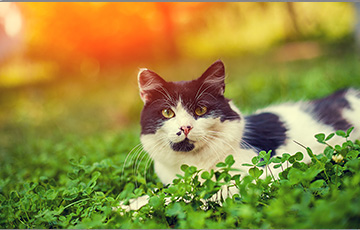 Cat breed image